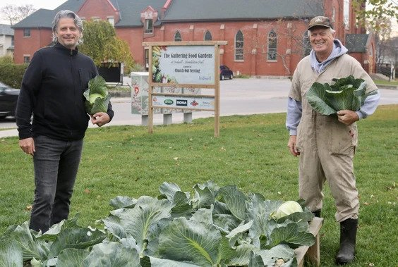 Eric Haverkamp, board chair, and Tony Stam, a member of the leadership group at Church Out Serving, harvesting cabbage in October 2020. (ASHLEY TAYLOR, The Simcoe Reformer)